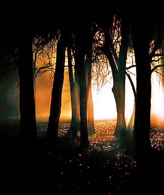 Jamun Tree Ghosts
