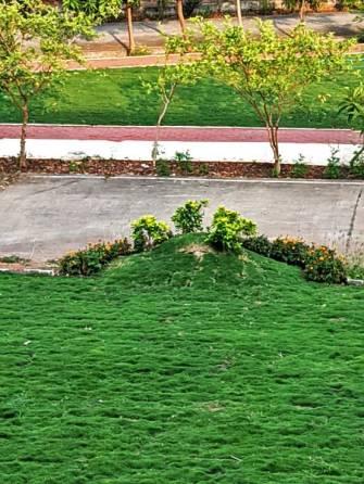lawn-hump